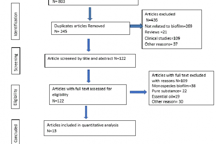 Different phases of a systematic review