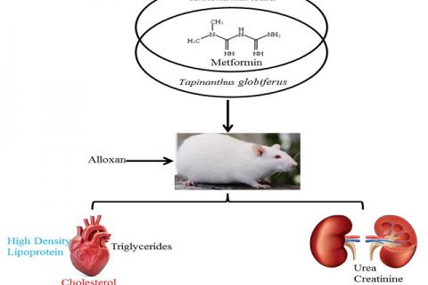 Metformin Potentiates the Antidiabetic Properties of Annona muricata and Tapinanthus globiferus Leaf Extracts in Diabetic Rats
