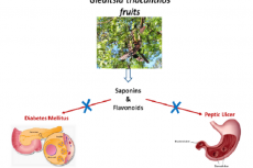 Characterization of Flavonoids and Saponins from Gleditsia triacanthos by LC-ESI/MS/MS Analysis: Pharmacological Assessment of the Anti-hyperglycemic and Anti-ulcerogenic Activities of G. triacanthos methanolic Fruit Extract and its n-Butanol Fraction